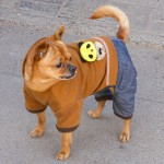 beijing-dogs-1030802